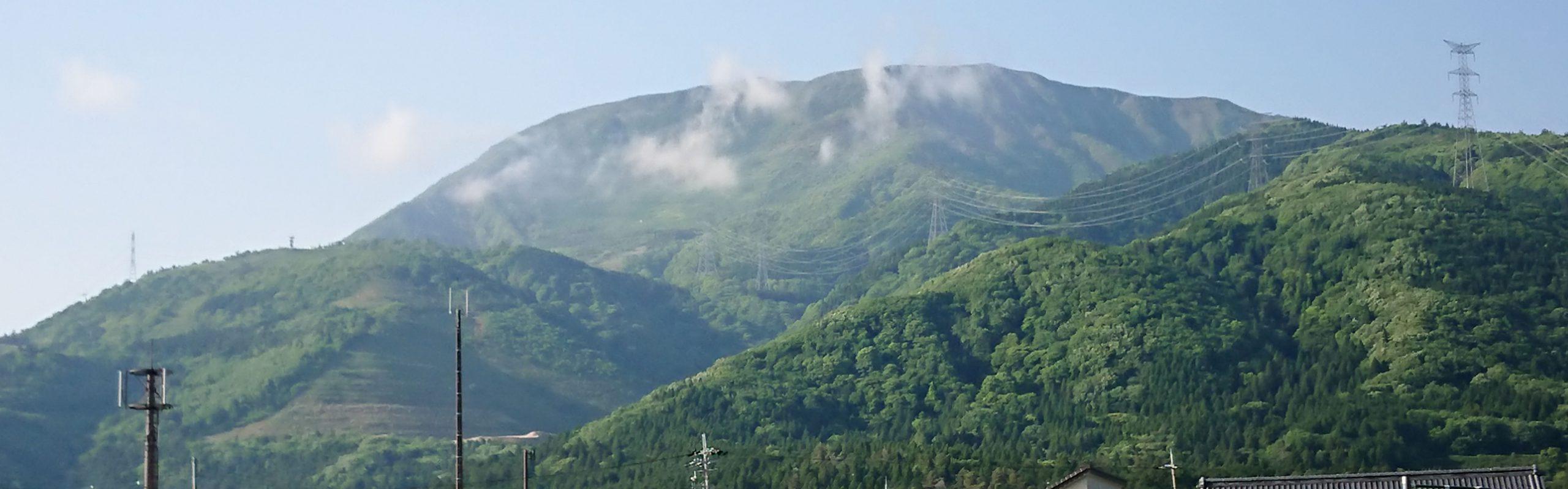 日本百名山伊吹山の麓のブルーベリー狩り園